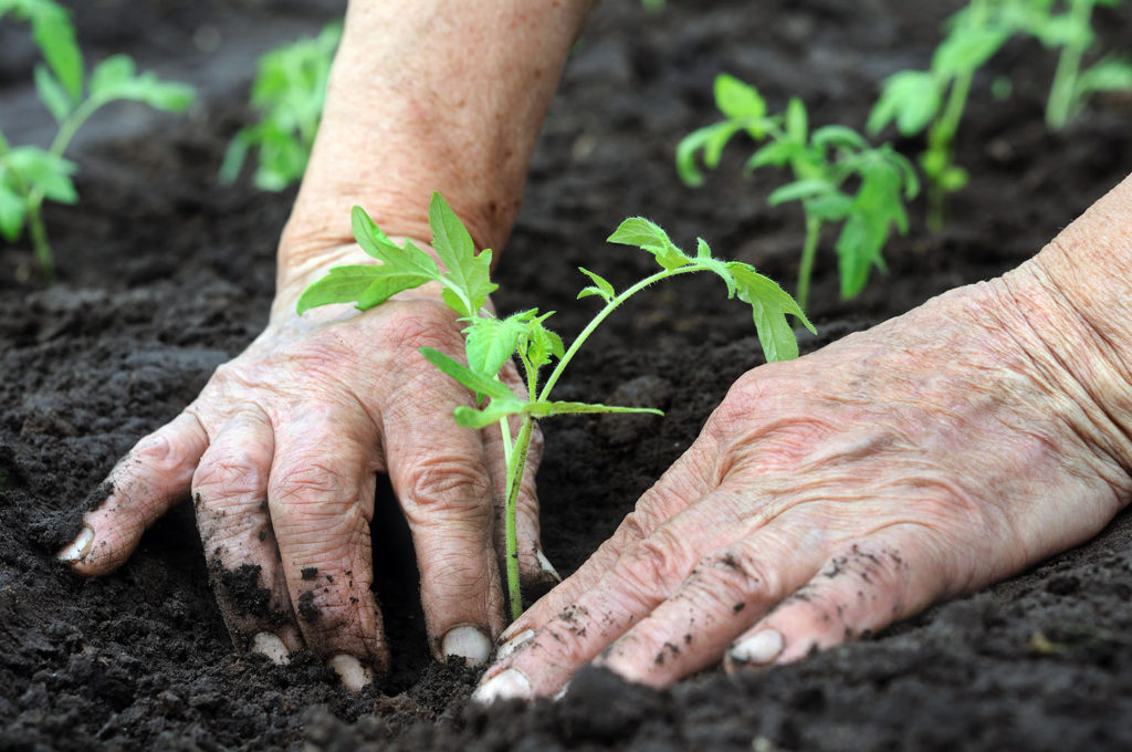 Agricultura Ecológica Bioculture